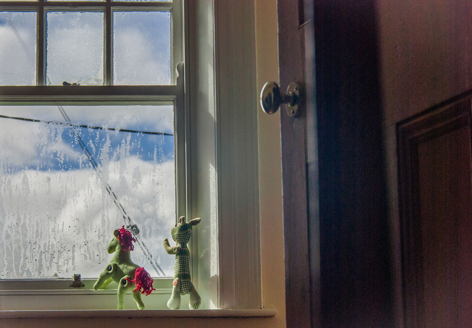 Pony at the window