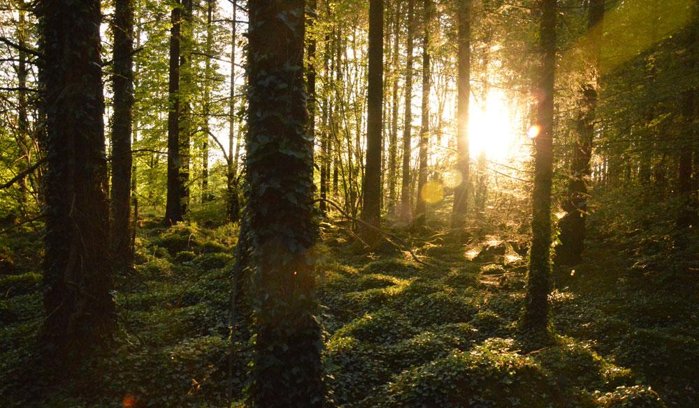Fairy woods